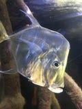 Ψάρια γυαλιού Στοκ Φωτογραφία