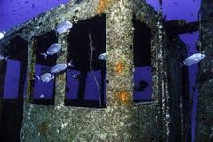 Ψάρια γύρω από το πηδαλιουχείο Στοκ φωτογραφία με δικαίωμα ελεύθερης χρήσης