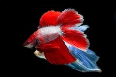 Ψάρια δαγκωμάτων με τα όμορφα χρώματα στοκ φωτογραφίες