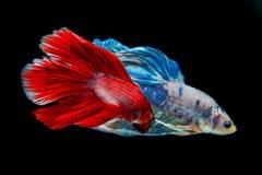 Ψάρια δαγκωμάτων με τα όμορφα χρώματα στοκ φωτογραφία