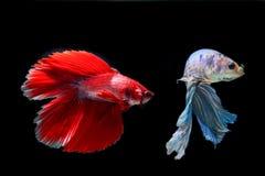 Ψάρια δαγκωμάτων με τα όμορφα χρώματα στοκ φωτογραφία με δικαίωμα ελεύθερης χρήσης