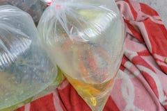 Ψάρια ενυδρείων που συσκευάζονται σε μια πλαστική τσάντα για την πώληση σε μια αγορά μέσα στοκ φωτογραφίες