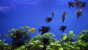 Ψάρια ενυδρείων στο ενυδρείο απόθεμα βίντεο