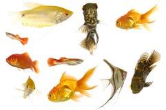 ψάρια ενυδρείων Στοκ φωτογραφίες με δικαίωμα ελεύθερης χρήσης