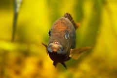 ψάρια ενυδρείων στοκ εικόνες με δικαίωμα ελεύθερης χρήσης