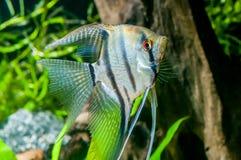 Ψάρια ενυδρείων Colorfull στοκ φωτογραφίες