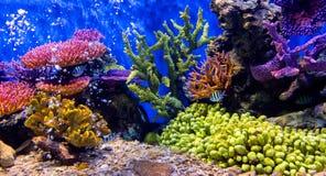 Ψάρια ενυδρείων με το κοράλλι και υδρόβια ζώα στοκ φωτογραφία με δικαίωμα ελεύθερης χρήσης