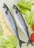 Ψάρια επαρχίας στοκ φωτογραφία με δικαίωμα ελεύθερης χρήσης