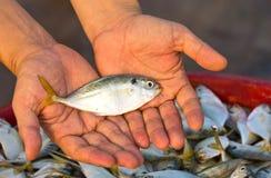 ψάρια εσείς Στοκ εικόνα με δικαίωμα ελεύθερης χρήσης