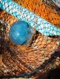 Ψάρια ζελατίνας Στοκ Φωτογραφία