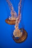 Ψάρια ζελατίνας Στοκ φωτογραφία με δικαίωμα ελεύθερης χρήσης