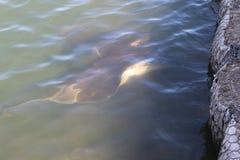 Ψάρια ζελατίνας Στοκ φωτογραφίες με δικαίωμα ελεύθερης χρήσης