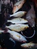 Ψάρια θάλασσας στοκ φωτογραφία με δικαίωμα ελεύθερης χρήσης