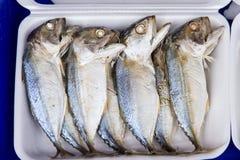 Ψάρια θάλασσας στη φρέσκια αγορά στο πορθμείο Angsila, Choburi, Ταϊλάνδη Στοκ Εικόνες