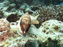 Ψάρια θάλασσας Στοκ Εικόνες