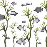 Ψάρια θάλασσας Στοκ Εικόνα