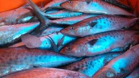 Ψάρια θάλασσας - Allepey, Κεράλα Στοκ Φωτογραφίες