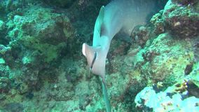 Ψάρια θάλασσας angthong εθνική όψη της Ταϊλάνδης θάλασσας πάρκων Υποβρύχιο βίντεο Νερό κατάδυση υποβρύχια φιλμ μικρού μήκους