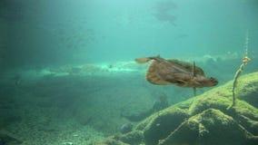 Ψάρια - θαλάσσια ζωή φιλμ μικρού μήκους