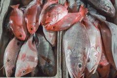 Ψάρια θαλασσινών πώλησης φρέσκα στην τοπική αγορά τουριστικού αξιοθεάτου σε Jimbaran, Μπαλί Στοκ Εικόνα