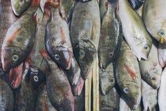 Ψάρια θαλασσινών πώλησης φρέσκα στην τοπική αγορά τουριστικού αξιοθεάτου σε Jimbaran, Μπαλί Στοκ εικόνες με δικαίωμα ελεύθερης χρήσης