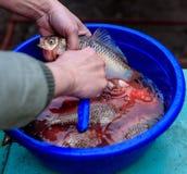 Ψάρια καθαρισμού στις κλίμακες Στοκ Εικόνα