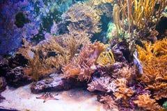 Ψάρια και εγκαταστάσεις Colourfull στο σκοτεινό βαθύ μπλε νερό Στοκ φωτογραφίες με δικαίωμα ελεύθερης χρήσης