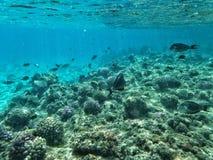 Ψάρια και κοράλλια κάτω από τη θάλασσα στοκ εικόνες