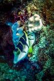 Ψάρια και κοράλλια Φωτογραφία κινηματογραφήσεων σε πρώτο πλάνο που λαμβάνεται στους σκοπέλους της maldivian ακτής Στοκ Εικόνα