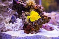 Ψάρια και κοράλλια Στοκ φωτογραφίες με δικαίωμα ελεύθερης χρήσης