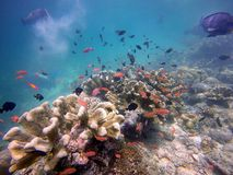 Ψάρια και κοράλλι Στοκ εικόνα με δικαίωμα ελεύθερης χρήσης