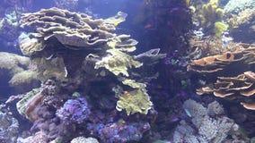 Ψάρια και κοραλλιογενής ύφαλος απόθεμα βίντεο