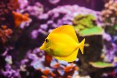 Ψάρια και κοραλλιογενής ύφαλος Στοκ φωτογραφία με δικαίωμα ελεύθερης χρήσης