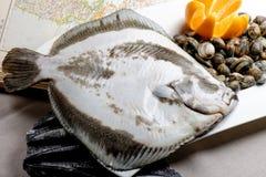 Ψάρια και μαλάκια ρόμβων Στοκ φωτογραφία με δικαίωμα ελεύθερης χρήσης