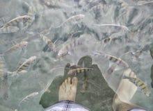 Ψάρια και πόδια Στοκ φωτογραφία με δικαίωμα ελεύθερης χρήσης