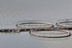 ψάρια καλλιέργειας στοκ φωτογραφία με δικαίωμα ελεύθερης χρήσης