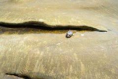 Ψάρια καπνιστών νεκρά στην παραλία Στοκ εικόνα με δικαίωμα ελεύθερης χρήσης