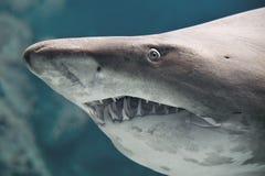 Ψάρια καρχαριών στοκ φωτογραφίες