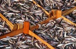 ψάρια κιβωτίων στοκ εικόνες με δικαίωμα ελεύθερης χρήσης