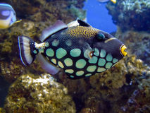 ψάρια κινηματογραφήσεων &sigm Στοκ Φωτογραφία
