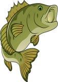 ψάρια κινούμενων σχεδίων αστεία Στοκ Εικόνα