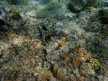 Ψάρια κοντά στην κοραλλιογενή ύφαλο Στοκ Εικόνες