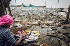 Ψάρια κοπής Rohu στο riverbank στο βιρμανός χωριό 3 στοκ εικόνες