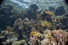 ψάρια κοραλλιών Στοκ εικόνες με δικαίωμα ελεύθερης χρήσης