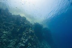 ψάρια κοραλλιών Στοκ Εικόνες