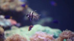 Ψάρια κοραλλιών απόθεμα βίντεο