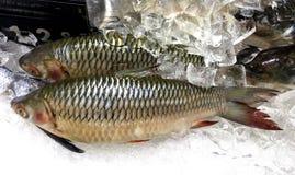 Ψάρια κυπρίνων φρέσκου Hoven με την τιμή και ετικέτα σε της Μαλαισίας Στοκ εικόνες με δικαίωμα ελεύθερης χρήσης
