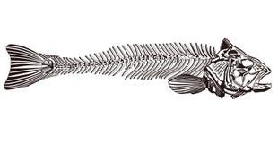 ψάρια κόκκαλων διανυσματική απεικόνιση