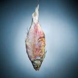 ψάρια κόκκαλων Στοκ Φωτογραφία