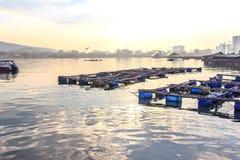 Ψάρια κλουβιών Στοκ Φωτογραφία
